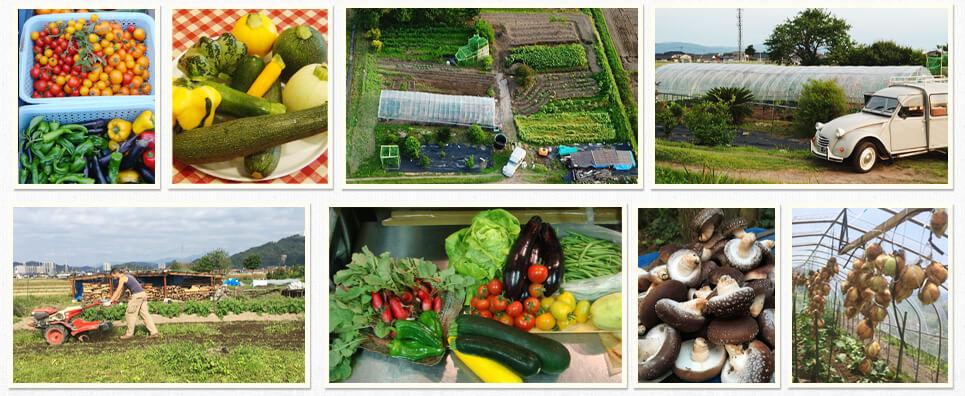 フランス料理自家菜園